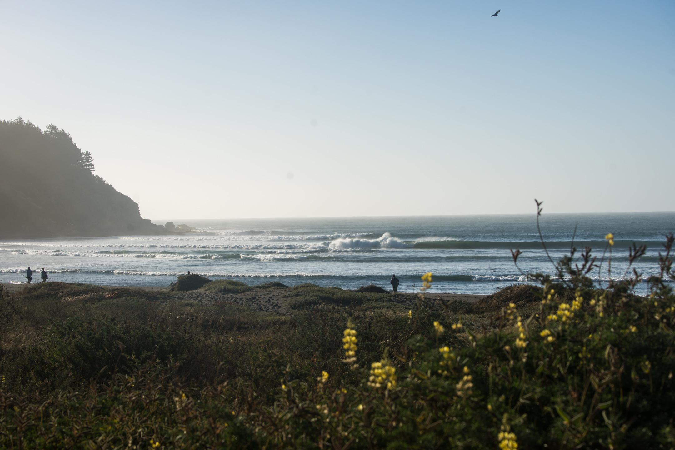 En camino a crear una nueva área marina protegida para la zona central de Chile
