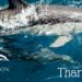 ¡Fuimos seleccionados por el Marine Conservation Institute!