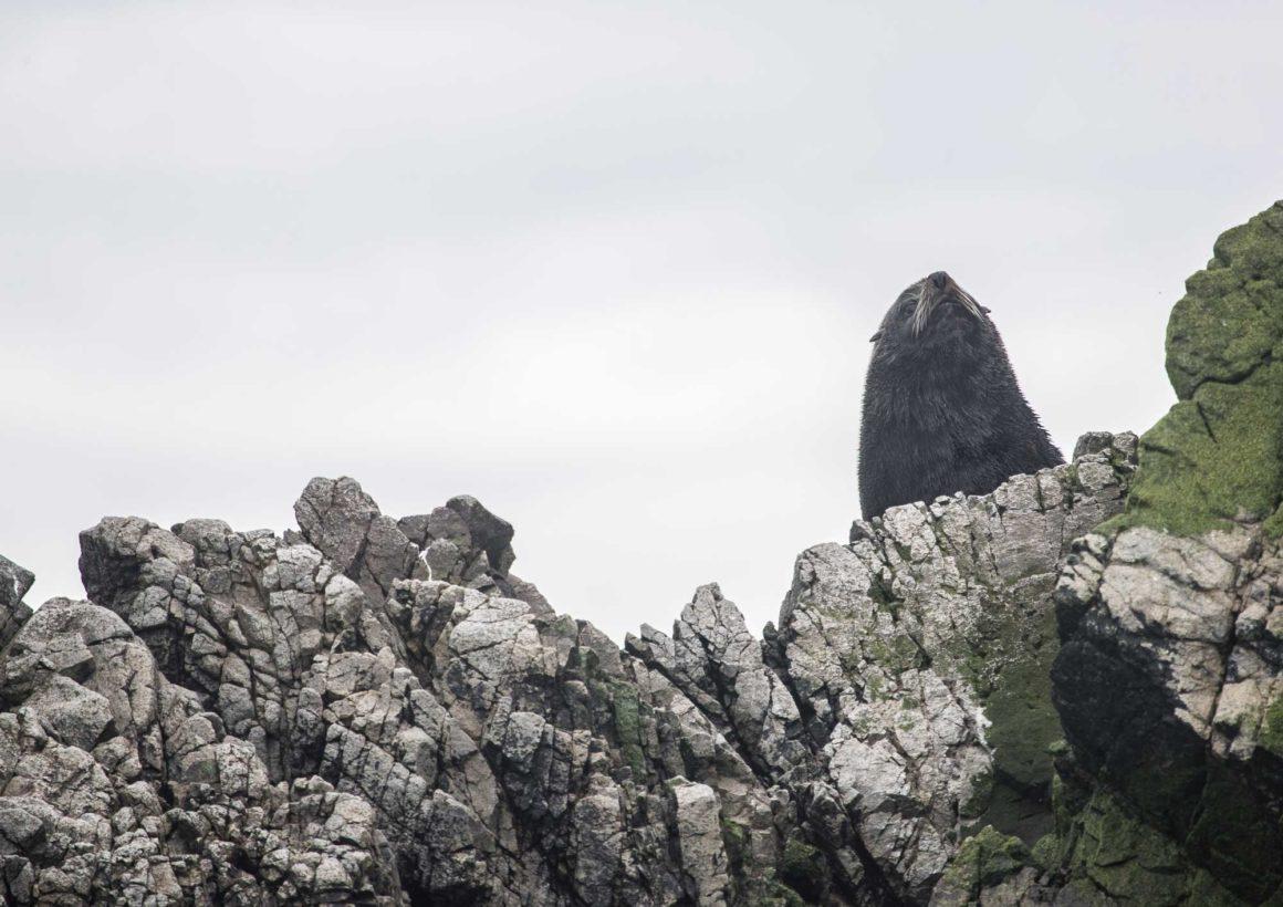 ¡¡Lo logramos!!  Se aprueba creación del Santuario Marino Costero Piedra del Viento
